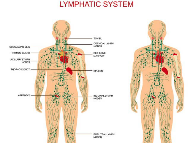 Groin for nodes lymph remedies in natural swollen How to